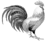 Coq made in France